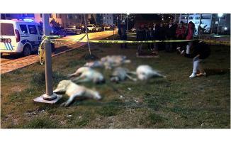 Ankara Batıkent'deki Köpek Zehirlenmesi Olayında 3 Gözaltı