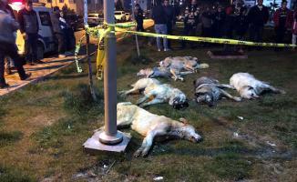 Ankara'daki Köpek Katliamına Ait Görüntüler Ortaya Çıktı!