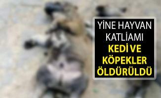 Balıkesir'de Hayvan Katliamı! Kedi ve Köpekler Öldü