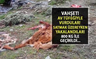 Korkunç! Manisa'da Atları Av Tüfeğiyle Öldürdüler, Satacakken Yakalandılar...