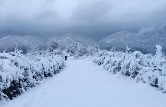 Korkunç, karlar eriyince 9 ceset ortaya çıktı! Van Başkale'de 9 yabancı uyruklu kişi donarak öldü