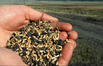 Yerli Tohum ve Fide Yasağı! Türkiye'nin bilinmeyen tarım politikaları