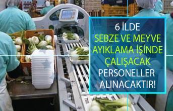 İŞKUR, meyve ve sebze ayıklama işinde çalışacak 70 personel alacak!