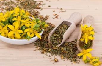Sarı kantaron nedir? Sarı kantaron yağı içmek zararlı mı? Sarı kantaron yağı neye yarar?
