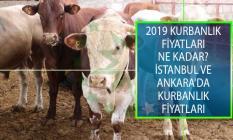 2019 Kurbanlık Fiyatları Ne Kadar? İstanbul Ve Ankara'da Kurbanlık Fiyatları Ne Kadar?