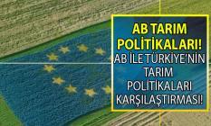 Avrupa Birliği'nde (AB) tarımsal yapı, tarımsal üretim ve tarım politikaları! Türkiye ve AB'nin tarım karşılaştırması