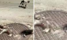 Antalya'da Vahşet ! 3 Parçalanmış Kedi Ölüsü Bulundu
