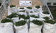 Bingöl'de 1 ton 280 kilogram esrar ve 501 bin 700 kök Hint keneviri ele geçirildi