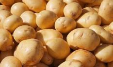 Patatesten üretici de tüketici de memnun! Patates Fiyatı 60 kuruşa düştü