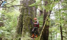 1.150 Orman mühendisi alımı iş başvurusu nasıl yapılır?
