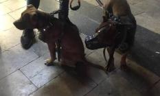Aydın'da Pitbull Terrier cinsi köpeklerini gezdiren şahıslara 15 bin TL para cezası!