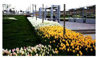 AKP'li Belediyeden ihalesiz 1 milyon 400 bin TL'lik çiçek ve gıda temini!