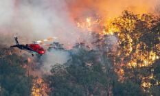 Avustralya yangınında acı tablo!