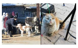 Depremzede hayvanları için ücretsiz tedavi! Türk Veteriner Hekimleri Birliği duyurdu
