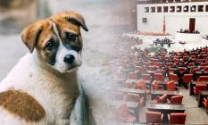 Erdoğan'ın Talimatıyla Hayvan Hakları Artık Kanuni Koruma Altına Alınıyor!