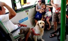 Otobüste yeni dönem; Evcil hayvanlar artık taşınabilecek!