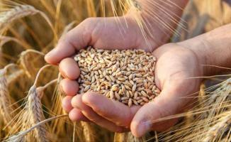 52 milyon 250 bin ton buğday ithal edildi!