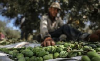 İç piyasaya sürülen Afrin zeytinyağları hakkında bakanlık 'ticari sır' diyerek bilgi vermedi!