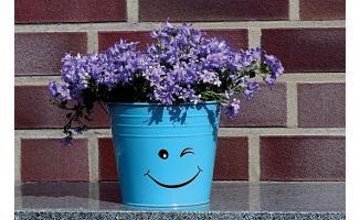 Bitkilerde Bilinç Var mı?