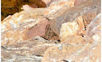 Köy sakinlerini korkutan görüntü! Yılanlar sürü halinde ortaya çıktı!