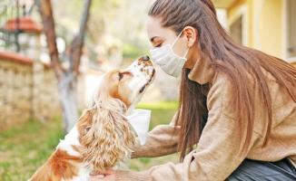 Sağlık Bakanlığı uyardı! Evcil hayvanı olanlar dikkat!