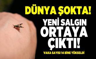 Koronavirüs salgını bitmeden sineklerden bulaşan yeni salgın ortaya çıktı! Vaka sayısı 14 bine yükseldi