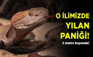 O ilimizde yılan paniği! Vatandaşlar tedirgin!