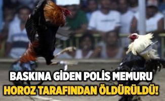 Yasa dışı horoz dövüşüne baskına giden polis memuru, horoz tarafından öldürüldü!