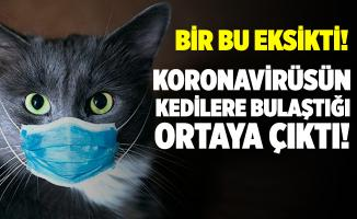 Bir bu eksikti! Koronavirüsün kedilere de bulaştığı ortaya çıktı!
