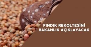 """Bakan Çelik : """"2016 Fındık Rekoltesini Bakanlık Açıklayacak"""""""