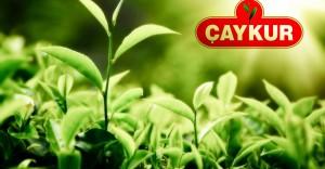 Trabzon Çay İşletmeleri Genel Müdürlüğü Eski Hükümlü Personel Alımı