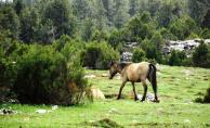 Ardıç ağaçlarından oluşan ormana mermer ocağı yapmak ihanettir!
