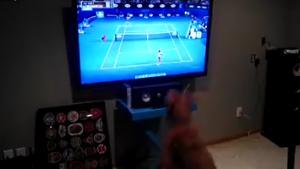 Tenis seven köpek