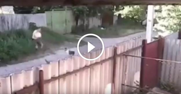 Pitbull Köpekler Yarım Saat Boyunca Adama Saldırdı!