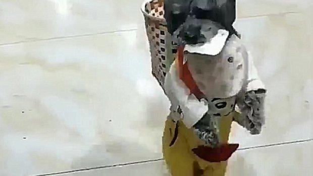 Dünyanın konuştuğu o akıllı çinli köpek!