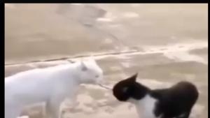 İçine Michael Jackson kaçan kedi